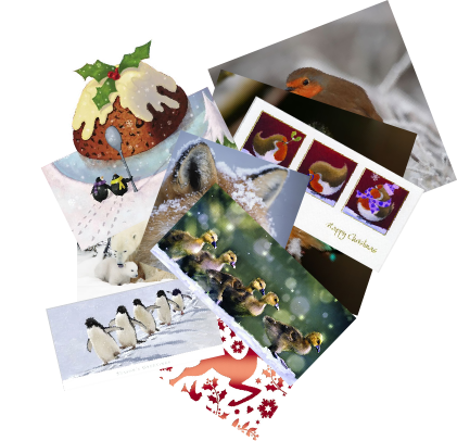 Selection of Animal Aid Christmas cards